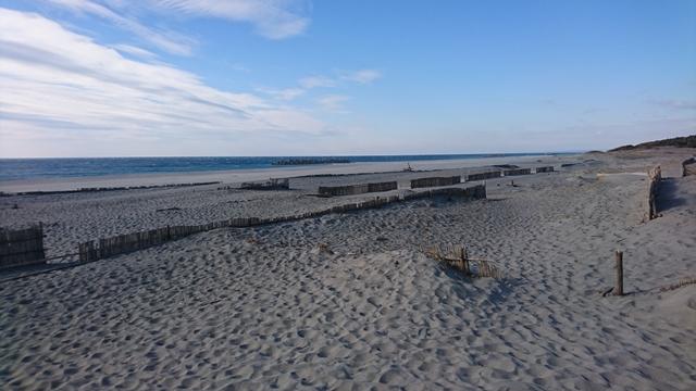 中田島砂丘 堆砂垣