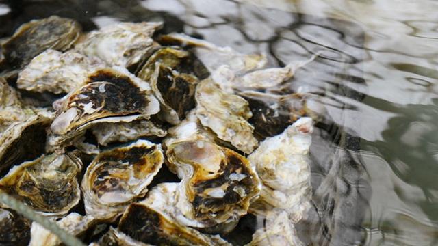 浜名湖産 牡蠣
