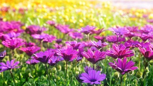 浜名湖ガーデンパーク 季節の花々