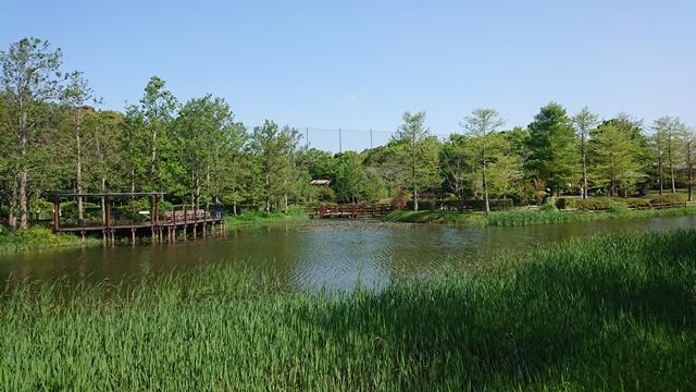 浜名湖ガーデンパーク スイレン