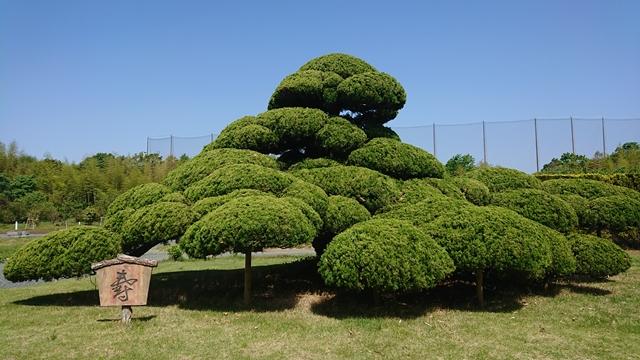 浜名湖ガーデンパーク 巨大盆栽