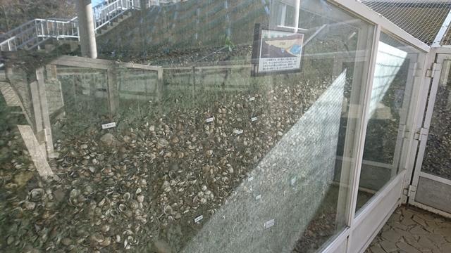 蜆塚公園 貝層保存施設